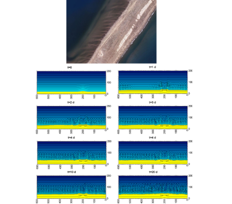 Upper panel: Alongshore-rhythmic system of transverse finger bars in the inner side of El Trabucador beach, Ebro delta (Source: Institut Cartogràfic i Geològic de Catalunya, flight in summer 2012).  Lower panel: Time development of the instability in the default simulation, with bed level contours every 0.1 m. The alongshore and cross-shore coordinates are in meters. Yellow and blue colours represent the emerged and submerged beach, respectively