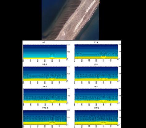 Panel superior: Sistema rítmico de barras transversales en el lado interior de la playa de El Trabucador, delta del Ebro (Fuente: Institut Cartogràfic i Geològic de Catalunya, vuelo de verano de 2012).  Panel inferior: Desarrollo temporal de la inestabilidad en la simulación básica, contornos del lecho marino cada 0.1 m. Las coordenadas a lo largo y ancho de la costa están en metros. Los colores amarillo y azul representan la playa emergida y sumergida, respectivamente